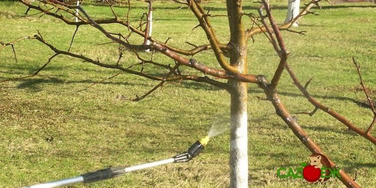 Обработка яблонь от болезней и вредителей летом и осенью