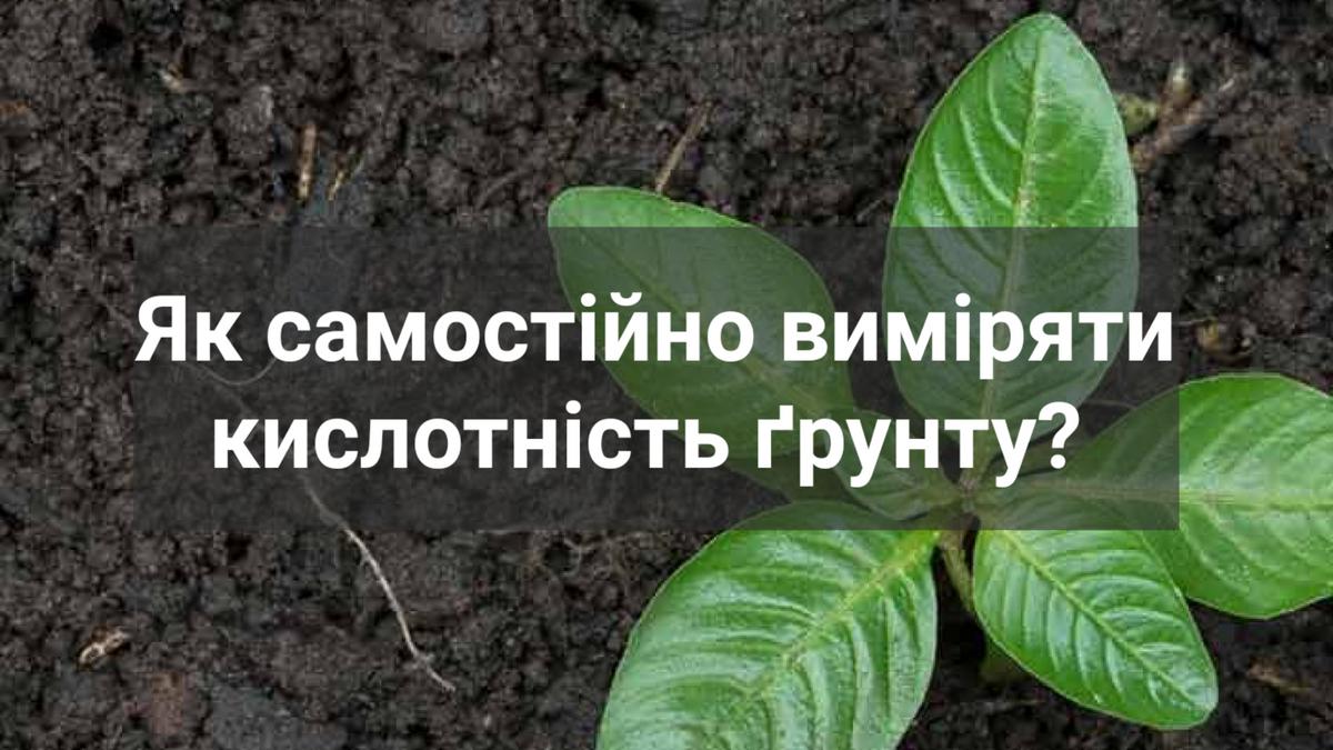 Всё о земле для цветов комнатных: как изменить кислотность почвы для растений