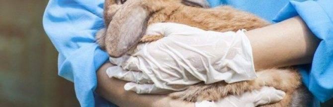 Инфекционный стоматит у кроликов.