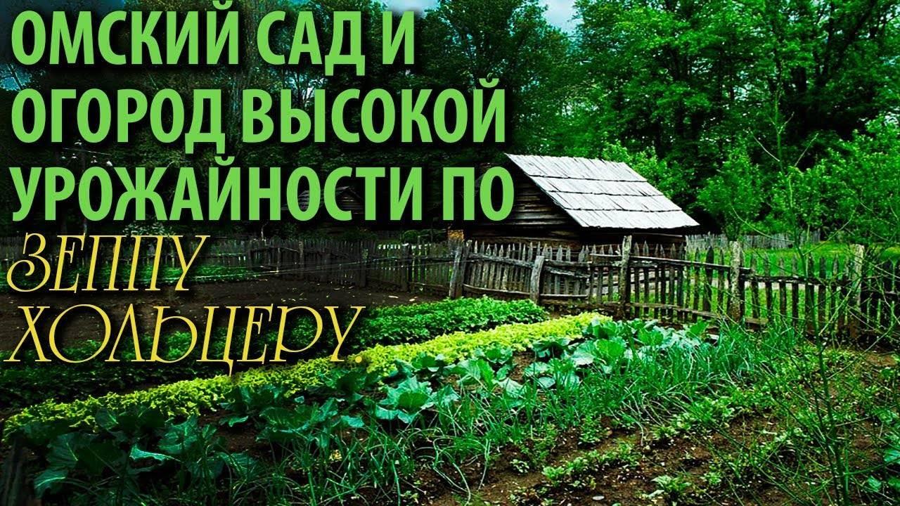 Как создать гильдию для фруктовых деревьев (практика пермакультурного садоводства) - огород, сад, балкон - медиаплатформа миртесен