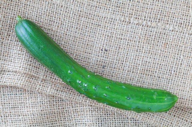 Огурцы китайские холодоустойчивые: как выращивать в теплице, фото, урожайность сорта + отзывы