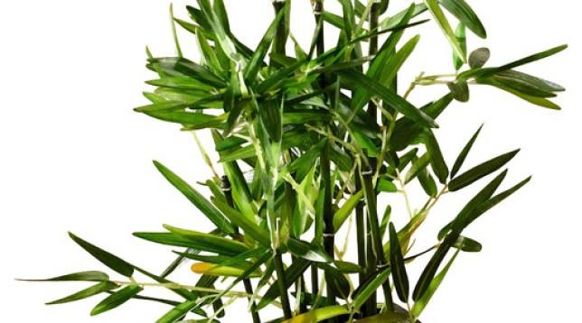 Как рассадить бамбук - wikihow