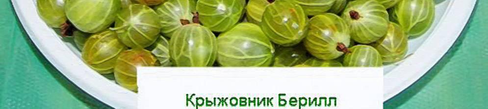 Крыжовник малахит: отзывы, фото, описание сорта, выращивание, размножение, урожайность, посадка и уход