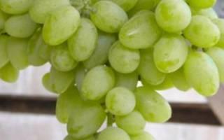 Зеленый виноград: различные сорта и их описание