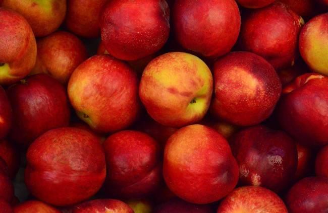 Хранение яблок в домашних условиях на зиму