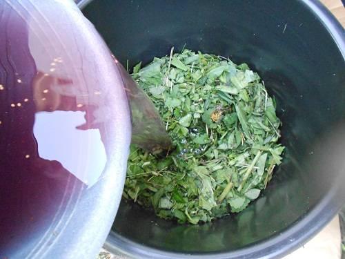 Какова польза крапивы для подкормки помидоров