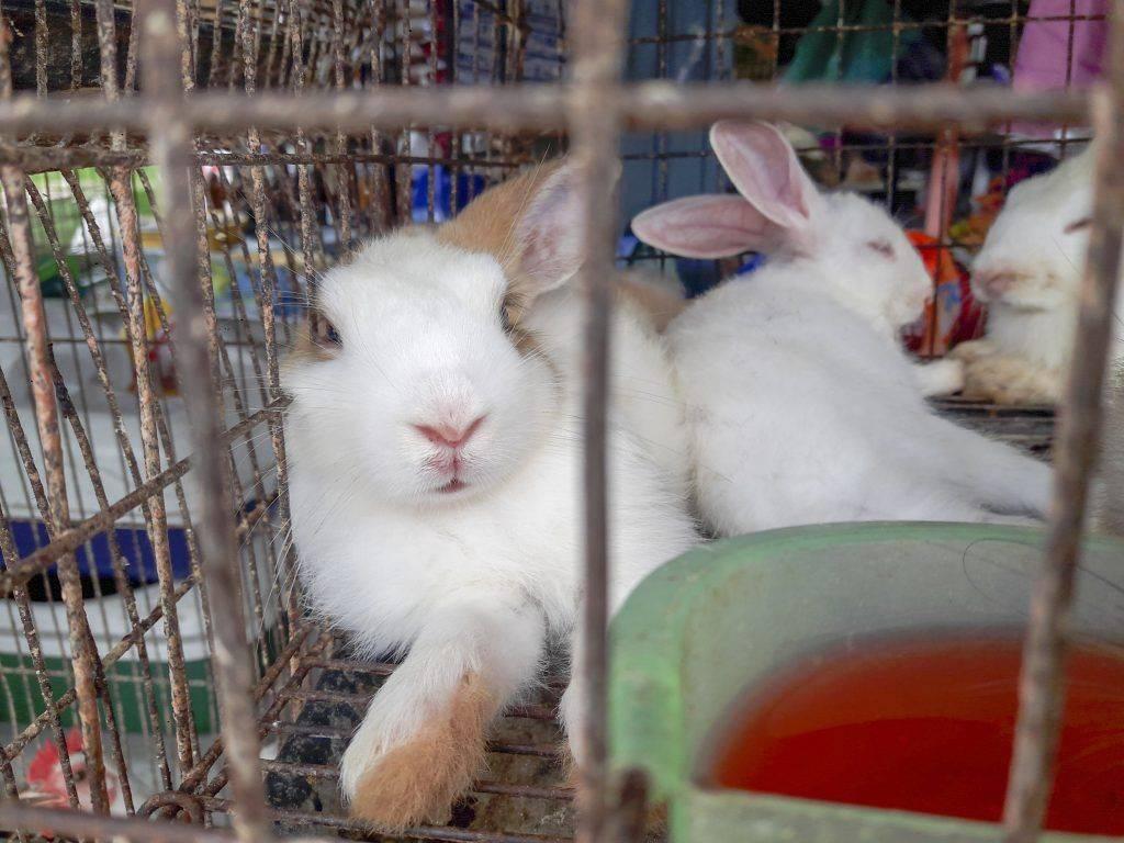 Какие бывают клетки для кроликов и как их сделать самому?