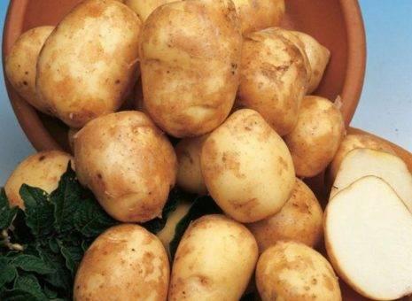 """Описание и характеристика картофеля """"сказка"""", уход и отзывы дачников"""