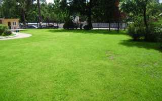 Когда сеять газонную траву - весной или осенью