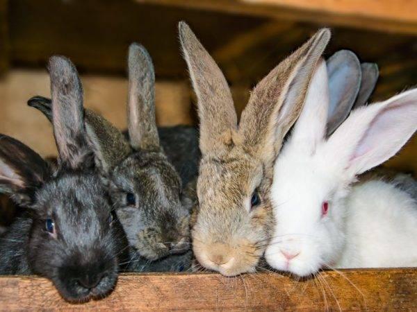 Беременность и роды кроликов: сроки, признаки, правила ухода | домашние животные