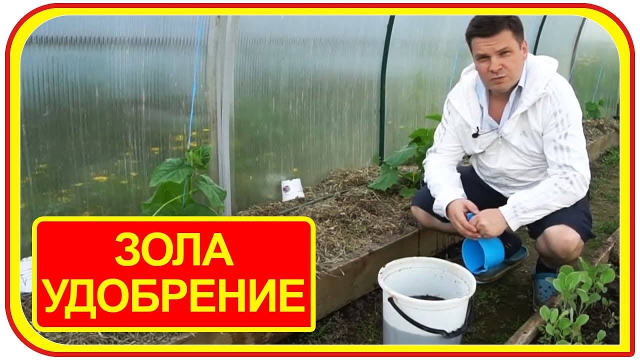 Зола для рассады томатов и перца