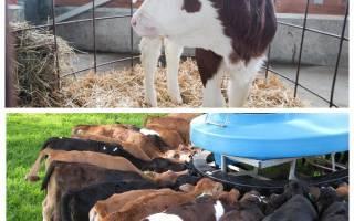 Вес теленка по месяцам