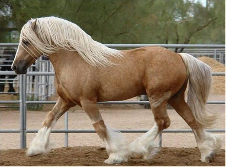 ᐉ французская лошадь породы першерон - zooon.ru