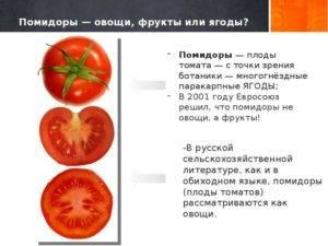 Происхождение томата – что это такое: фрукт или овощ, откуда к нам пришел помидор