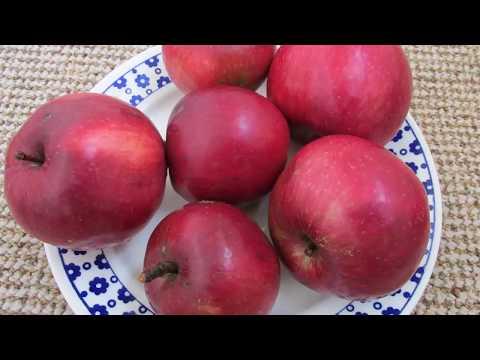 Яблоня малиновка: описание, фото, отзывы