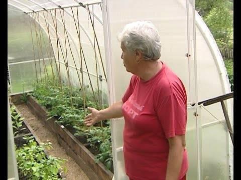 Огурцы и помидоры в одной теплице из поликарбоната: как правильно разместить и ухаживать – видео инструкция