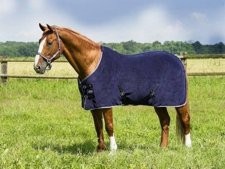 Какими бывают попоны для лошадей?