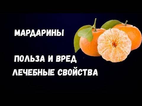 Польза и вред мандаринов для здоровья: лечебные свойства для мужчин и женщин + использование в диетическом питании и противопоказания