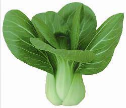 Капуста пак- чой - описание растения и способов его выращивания