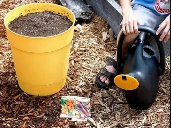 Подкормка свеклы и моркови в открытом грунте для большого урожая: чем подкормить