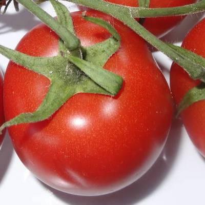 Томат махитос f1 - описание сорта гибрида, характеристика, урожайность, отзывы, фото