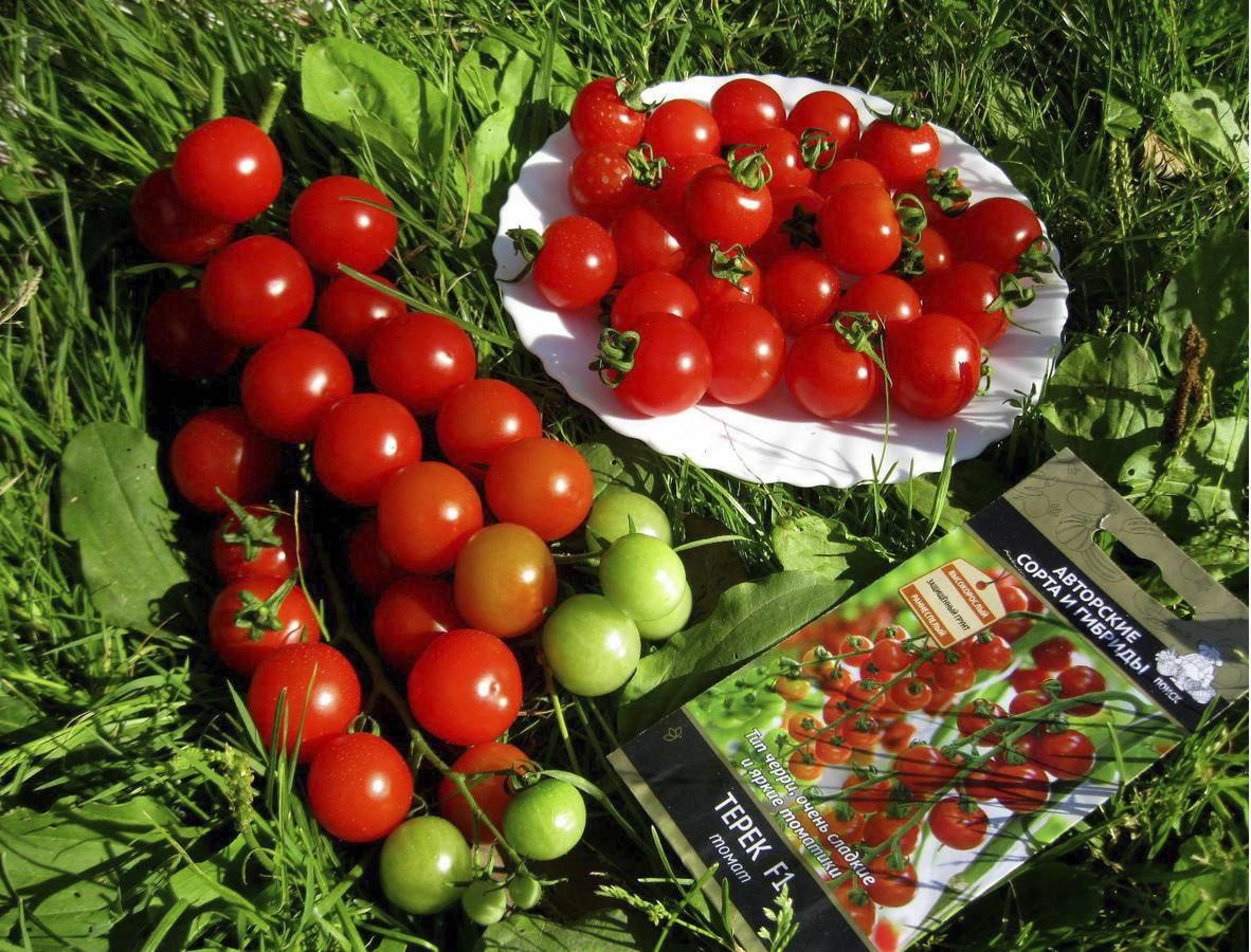 Томат «свит черри» f1: описание сорта, фото и особенности выращивания помидора русский фермер