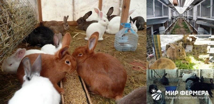 Особенности зимнего содержания кроликов