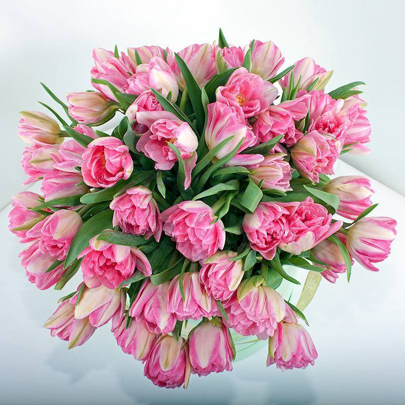 Тюльпаны пионовидные – выращиваем роскошные цветы