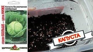 Квашенная капуста от юлии миняевой - лучший огород