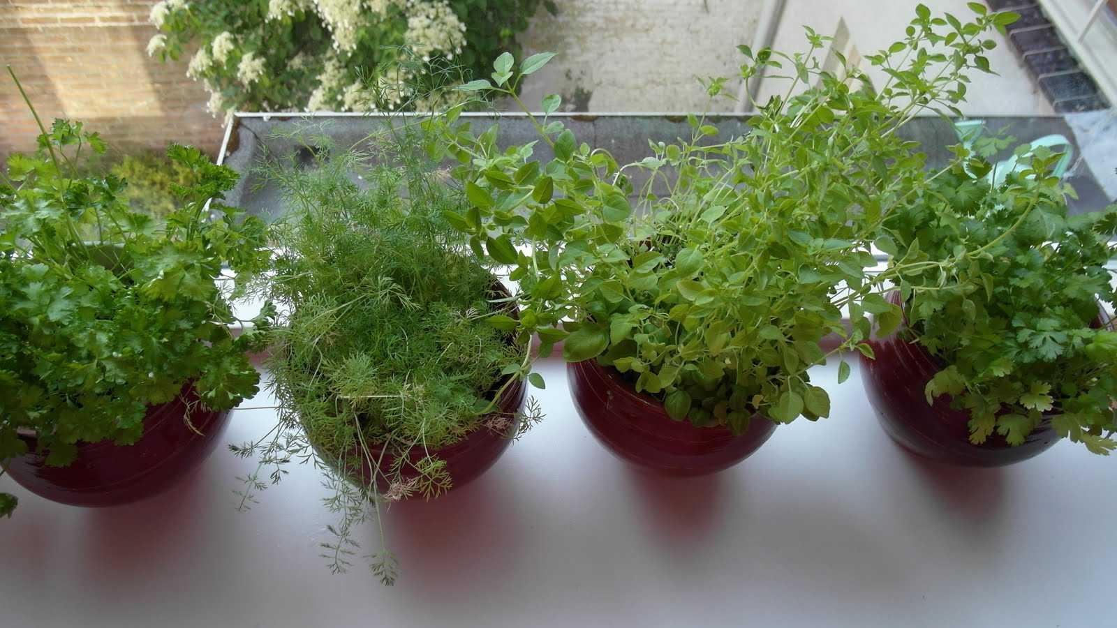 Выращивание зелени зимой на подоконнике для начинающих