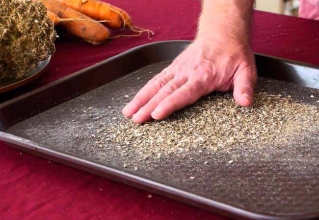 Как подготовить семена моркови к посадке | во саду и в огороде