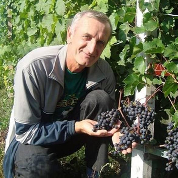 Какой укрывной материал для виноградника выбрать