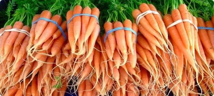 Способ посева моркови - советы и отзывы о нем читательницы   сайт о саде, даче и комнатных растениях.