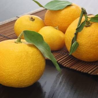 Юдзу, лимон из японии
