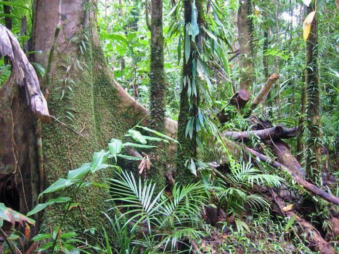 Природная зона влажных экваториальных лесов: райский сад в дикой природе