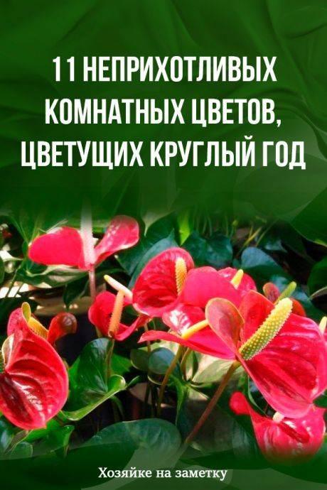Неприхотливые комнатные растения: названия и уход