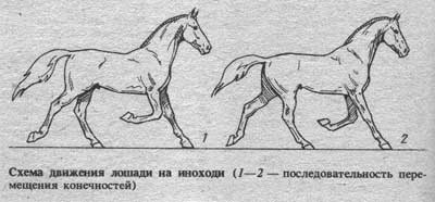 Способы и виды бега лошади: обзор, описание и фото способы и виды бега лошади: обзор, описание и фото