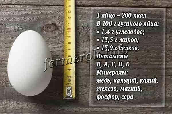 Гусиные яйца: польза, в чем вред, как готовить, хранить, таблица состава, противопоказания