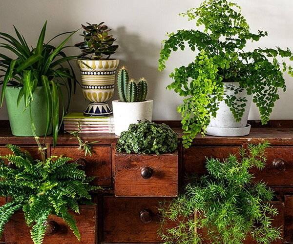 Уход за комнатными растениями в домашних условиях (21 фото): как посадить суккулент и другой цветок в горшок? технология выращивания