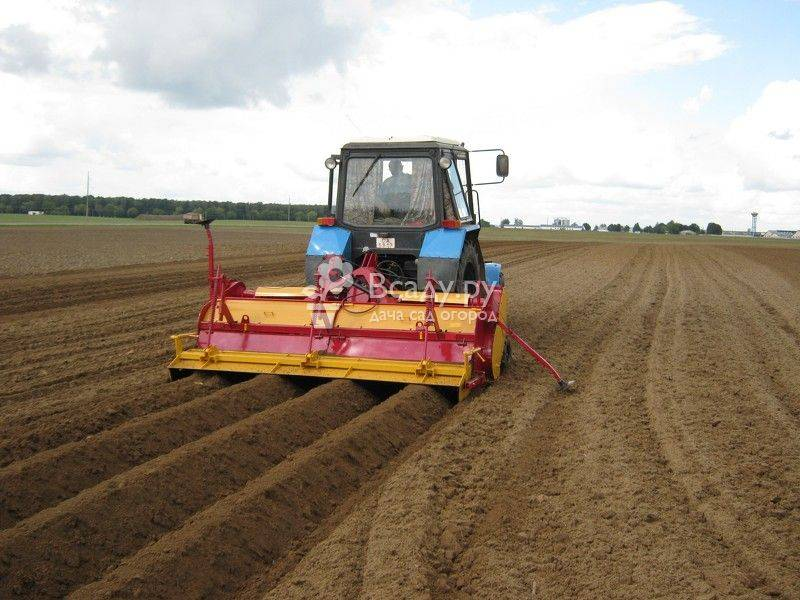 Неприхотливость и легкость плюс щедрый урожай — посадка картошки в гребни: эффективный способ ее выращивания