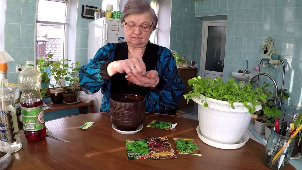 Как вырастить рукколу на подоконнике в доме и в квартире