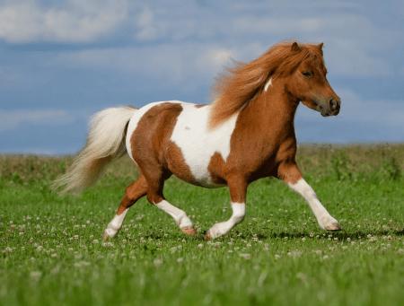 Лошади пони: список пород с описанием и фото