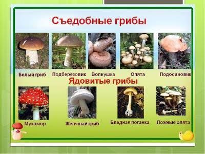 Классификация и основные виды грибов
