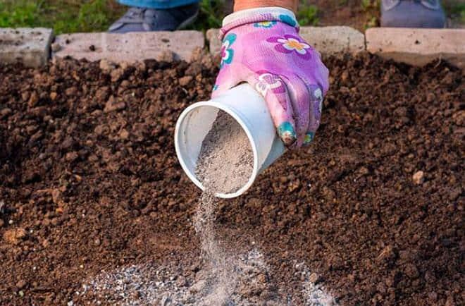 Подкормка растений золой: как настоять золу для полива, как применять