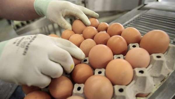 Сколько весит куриное яйцо, без скорлупы, сырое и вареное