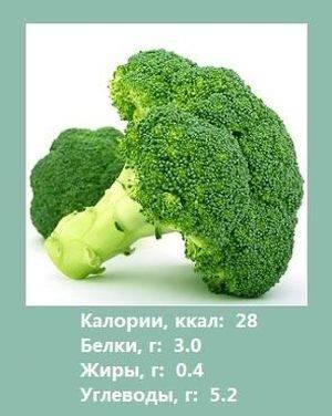 Брокколи: фото, способы и особенности выращивания, сорта и названия - sadovnikam.ru