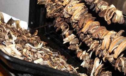 Как правильно сушить грибы в домашних условиях и способы сушки, правильное хранение сухих грибов. » сусеки