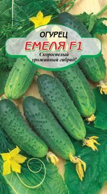 Огурец емеля f1: описание сорта, фото, отзывы садоводов, посадка и уход, выращивание