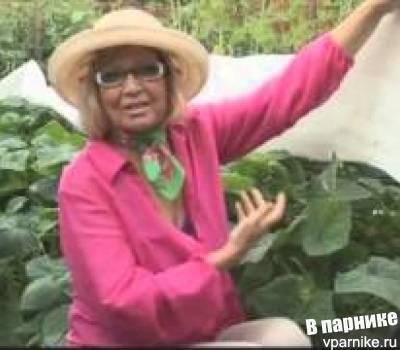 Читать книгу все о томатах и огурцах от октябрины ганичкиной октябрины ганичкиной : онлайн чтение - страница 1