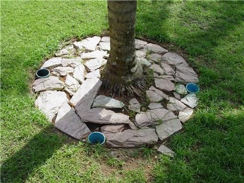 Приствольные круги плодовых деревьев: правила ухода, варианты оформления, мульчирование, высадка цветов, сидератов, использование декоративных элементов